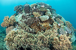 Manuk Island, Banda Sea, Indonesia; a coral bommie covered with a mix of encrusting hard corals and mushroom leather corals