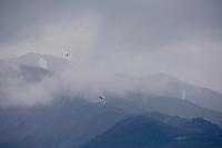 Short-eared owl and Northern harrier in flight, Denali National Park, Alaska