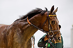 LOUISVILLE, KY - MAY 05: Behesht #10, ridden by Joseph Rocco, Jr., after the race on Kentucky Oaks Day at Churchill Downs on May 5, 2017 in Louisville, Kentucky. (Photo by Douglas DeFelice/Eclipse Sportswire/Getty Images)