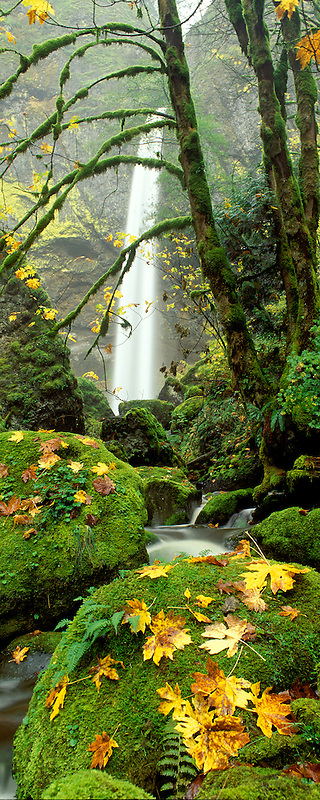 M00045L.tiff   Elowah Falls and maple leaves in fall color. Columbia River Gorge National Scenic Area.