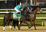 April 25, 2015 Churchill Downs Opening Night. Weast Hill in the post parade of the William Walker Stakes.  Jockey Jesus L. Castanon, owner Starsky Weast,  trainer Brad H. Cox.  By Rockport Harbor x Copperelle (Elusive Quality).  He finished 5th to Cinco Charlie.  ©Mary M. Meek/ESW/CSM