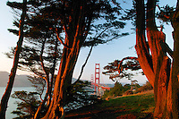 The Golden Gate Bridge in the evening from the Presidio, San Francisco, California