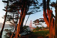 The Golden Gate Bridge in the evening from the Presidio, San Francisco, California