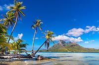 Palm trees on a motu with Mount Otemanu view, in Bora Bora lagoon, a romantic honeymoon destination, near Tahiti, French Polynesia, Pacific Ocean
