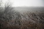 Farmland, winter, snow, Manitoba, Riding Mountain, Erickson area