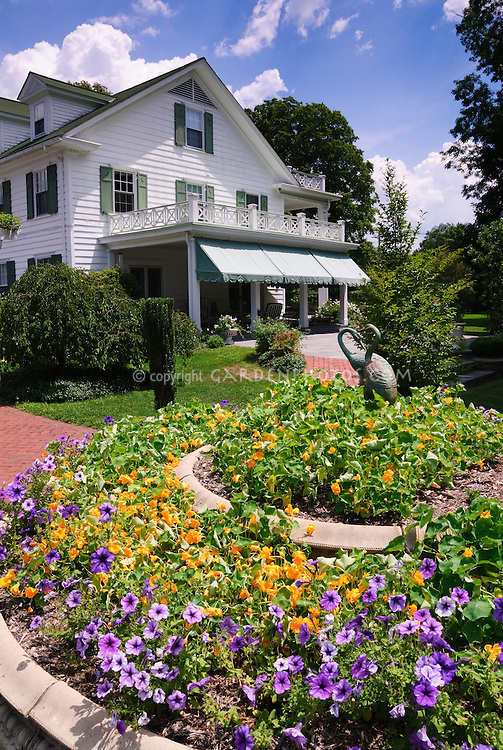Traditional white House in colonial style, annual  heirloom and old-fashioned flowers of nasturtiums Tropaeoleum, petunias, blue skies, clouds, sunny summer day, bird ornament statutes, trellis