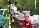 01 May 2011. Fernhill Urco finished second with Mary King aboard in the 2011 Rolex Three Day Event.  Pictured here during the award ceremony with his groom.