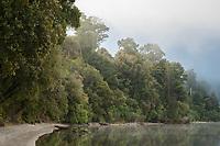Lakeshore of Lake Mapourika with native forest in moody sunrise, Westland National Park, West Coast, UNESCO World Heritage Area, New Zealand, NZ