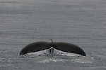 Alaska Wildlife. MTS