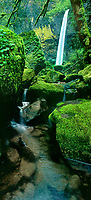 914500002 panoramic image of elowah falls framed by temperate rainforest ferns and mosses in columbia river gorge national scenic area oregon