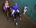 ARCADIA, CA - NOV 04: Beholder #8, ridden by Gary Stevens heads onto the track before winning the Breeders' Cup Distaff at Santa Anita Park on November 4, 2016 in Arcadia, California. (Photo by Scott Serio/Eclipse Sportswire/Breeders Cup)
