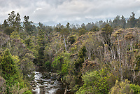 Moody morning scene with Zalas Creek and native forest, Westland Tai Poutini National Park, UNESCO World Heritage Area, West Coast, New Zealand, NZ