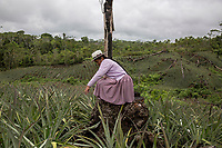 """A Quechua female coca grower known as """"cocalero"""", stands on a trunk as she looks over the family crops, in Entre Rios, Chapare province, Bolivia. November 28, 2019.<br /> Une cultivatrice de coca quechua, connue sous le nom de """"cocalero"""", se tient sur un tronc en regardant les cultures familiales, à Entre Rios, province du Chapare, Bolivie. 28 novembre 2019."""
