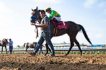 DEL MAR,CA-AUGUST 19: Catapult,ridden by Drayden Van Dyke,  after winning the Del Mar Mile at Del Mar Race Track on August 19,2018 in Del Mar,California (Photo by Kaz Ishida/Eclipse Sportswire/Getty Images)