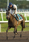 30 January 2010: Unforgotten and jockey Kent Desormeaux after the Sunshine Millions  Stakes at Gulfstream Park in Hallandale Beach, FL.