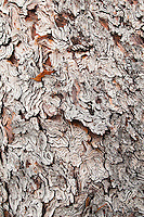 Close-up view of tree bark, Colchuck Lake, Alpine Lakes Wilderness, WA.