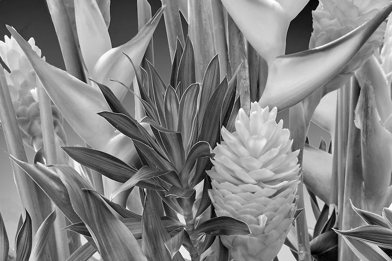 Tropical flower arrangement. Heliconia and ginger. Kauai, Hawaii