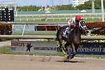 HALLANDALE BEACH, FL - FEBRUARY 06:     Tommy Macho #3 with jockey Luis Saez on board wins the 31st running of the Fred W. Hooper G3 on Donn Handicap Day  at Gulfstream Park on February 06, 2016 in Hallandale Beach, Florida. (Photo by Liz Lamont)