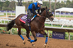 DEL MAR, CA - NOVEMBER 01: Ransom the Moon, owned by Agave Racing Stable & Jeffry Wilke and trained by Philip D'Amato, exercises in preparation for TwinSpires Breeders' Cup Sprint during morning workouts at Del Mar Thoroughbred Club on November 1, 2017 in Del Mar, California. (Photo by Anna Purdy/Eclipse Sportswire/Breeders Cup)
