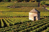 Stone shelter and Burgundy wine vineyard near Savigny les Beaune, Burgundy, France
