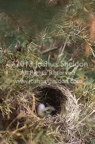 Birds nest in tree branch<br />