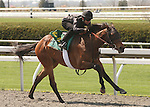 07 April 2011.  Hip #26 Street Sense - Mombasa filly consigned by Wavertree Stables.