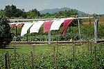 Amish farm, yard and clothesline .