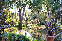 Pond and water garden at Lotusland in early morning light