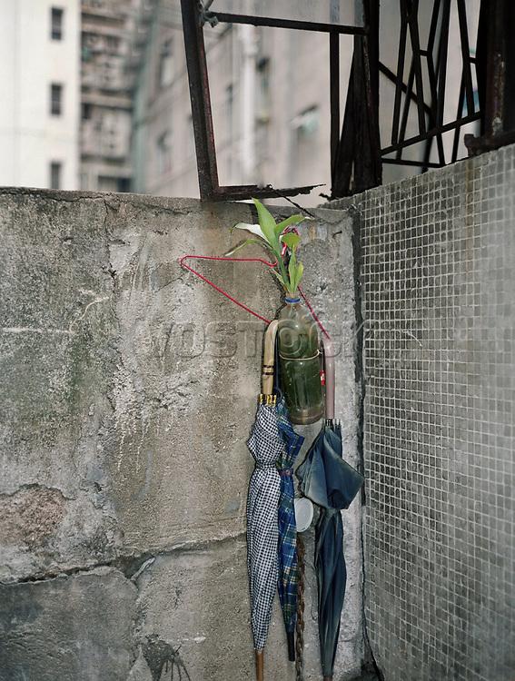 The back door, Regenschirme, Pflanzen, Wand, Hongkong, China, Asien, Mauer, Beton, Schirm, Schirme, Gruenpflanze<br /> <br /> English: Hong Kong, the back door. plants and umbrellas, Hong Kong Flora.<br /> HKFDBD page 59<br />  ***Keine Social_Media Nutzung***