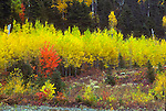 Fall foliage colour in Matapedia River Valley, Gaspe Peninsula, Quebec, Canada