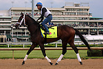 LOUISVILLE, KY - MAY 04: Dazzling Gem (Misremembered x Dazzler, by Vindication) jogs on the track at Churchill Downs (Louisville KY) with exercise rider Fernando Espinoza in preparation for the Kentucky Derby. Owner Steve Landers Racing LLC, trainer Brad H. Cox. (Photo by Mary M. Meek/Eclipse Sportswire/Getty Images)