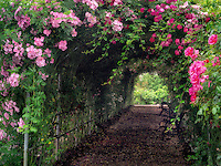Rose arbor. Heirloom Gardens. St. Paul, Oregon