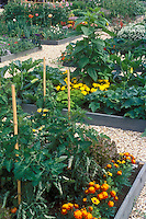 Edible landscape: Raised bed vegetable garden using galvanized steel, with tomatoes on pole stakes, marigolds, squash, zucchini, flowers mixed in