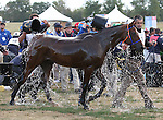 26 September 2010. #1 Nobby and Maria Mercedes Alvarez Ponton are the first to cross the finish of the Endurance test at the World Equestrian Games.