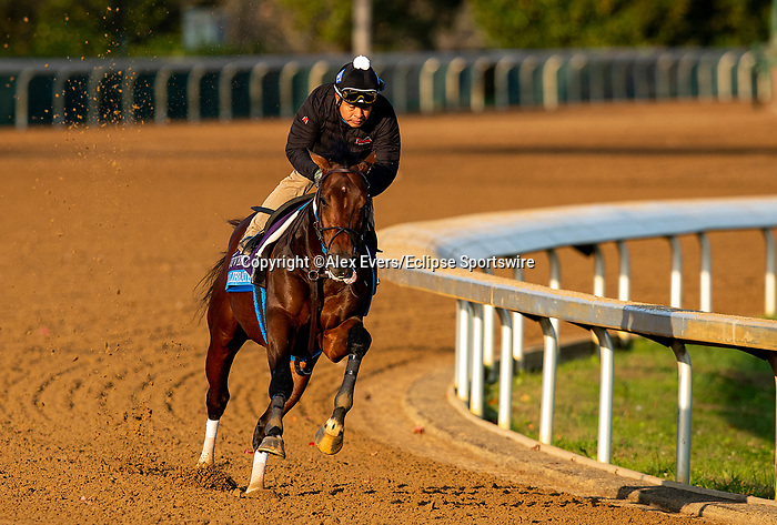November 1, 2020: Calibrate, trained by trainer Steven M. Asmussen, exercises in preparation for the Breeders' Cup Juvenile at  Keeneland Racetrack in Lexington, Kentucky on November 1, 2020. Alex Evers/Eclipse Sportswire/Breeders Cup /CSM