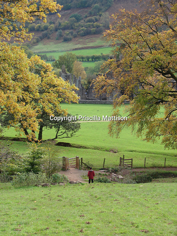 Llanthony, Wales - November 2, 2006:  A man crosses a sheep meadow toward the ruins of Llanthony Priory in the Welsh hills.