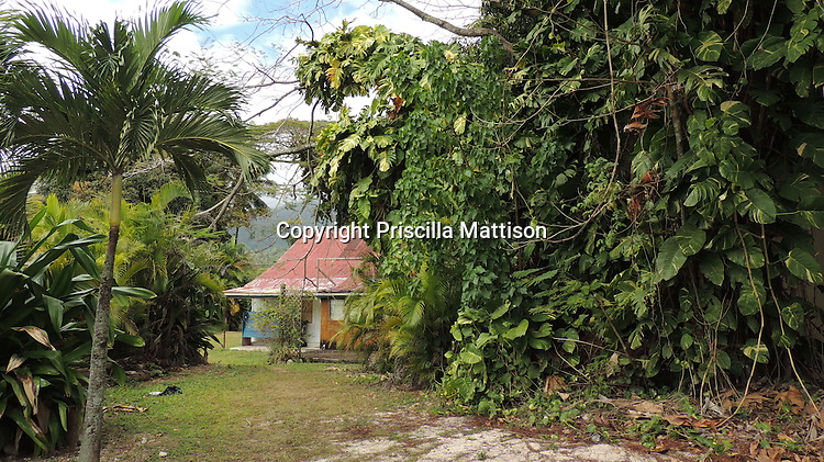 Rarotonga, Cook Islands - September 21, 2012:  Lush vegetation grows in front of a house with a red corrugated roof.