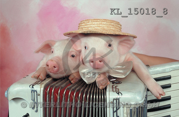 Interlitho, Alberto, ANIMALS, pigs, photos, pigs, accordion(KL15018/8,#A#) Schweine, cerdos
