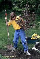 TT19-050z  Girl tamping soil, planting flowering plum tree- Prunus spp (TT19-004e,047z,048z,050z,051z,053z,056z,059z)
