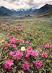 Brooks Range, Arctic National Wildlife Refuge, Alaska