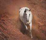 Western horses - mustangs of Wyoming