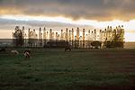 Farm On The Outskirst Of Lanai City