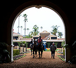 DEL MAR, CA - OCTOBER 29: Horses walk to the track for morning workouts at Del Mar Thoroughbred Club on October 29, 2017 in Del Mar, California. (Photo by Jesse Caris/Eclipse Sportswire/Breeders Cup)