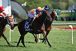 ARLINGTON HEIGHTS,IL-AUGUST 13: Sea Calisi,ridden by Florent Geroux,wins the Beverly D. Stakes at Arlington International Race Track on August 13,2016 in Arlington Heights,Illinois (Photo by Kaz Ishida/Eclipse Sportswire/Getty Images)