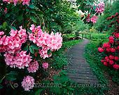Tom Mackie, FLOWERS, photos, Garden Path Through Rhododendrons, Hoveton Hall Gardens, Norfolk, England, GBTM966014-2,#F# Garten, jardín
