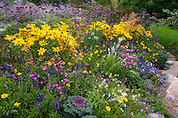 A Bed of Annuals
