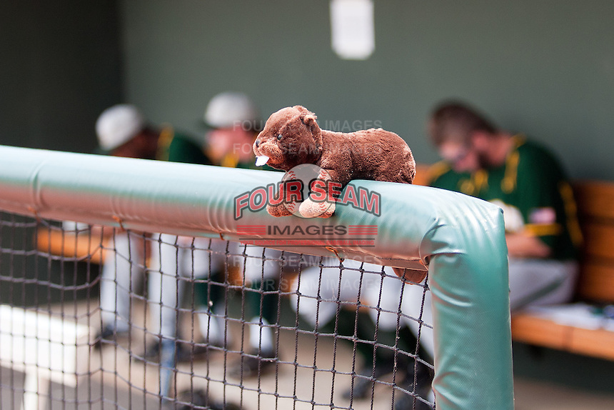 Baylor Bears beaver mascot the NCAA Regional baseball game against Oral Roberts University on June 3, 2012 at Baylor Ball Park in Waco, Texas. Baylor defeated Oral Roberts 5-2. (Andrew Woolley/Four Seam Images)