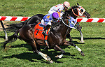 MAY 15, 2015: Ben's Cat, ridden by Julian Pimentel, outruns Bold Thunder, ridden by Pierre Ortegas to win the Jim McKay Turf Sprint Stakes on Black-Eyed Susan Day at Pimlico Race Course in Baltimore, Maryland. Scott Serio/ESW/Cal Sport Media