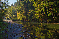 Sol Duc River on Merrill Ring property.  Olympic Peninsula, Washington.  Sept.