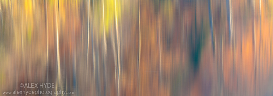 Abstract of autumnal reflections in the Upper Lakes, created using a long exposure. Plitvice Lakes National Park, Croatia. November. Digitally stitched image.